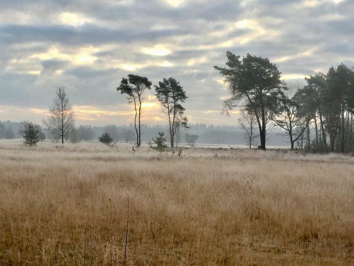 Gras op de Braakhuizensche Heide bij Geldrop. Foto Marlies Smulders