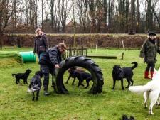 Gemeente ziet hondenspeeltuin op droomlocatie naast café De Twentse Nar in De Lutte niet zitten