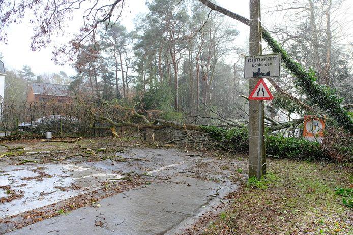 Tientallen bomen vielen omver door het zware stormweer van gisteren.