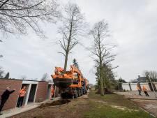 Bomen in Losser verplant met grootste schep van Europa; 'Kijk daar rijdt een boom door de straat'