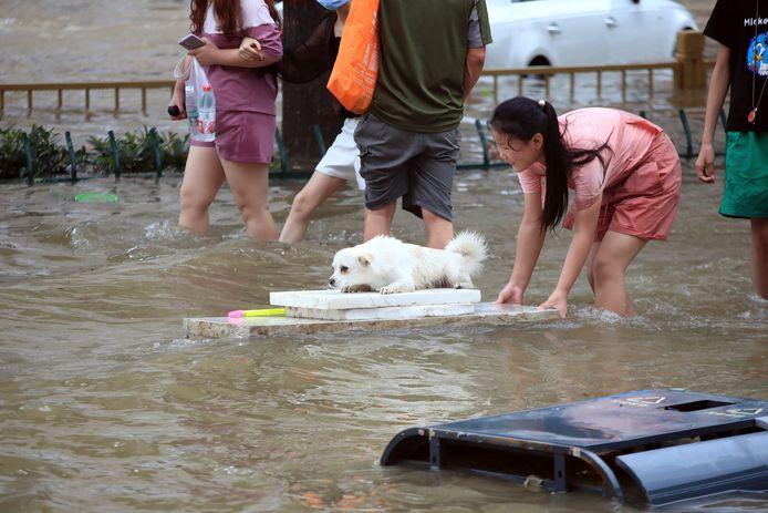 Een meisje brengt haar hond in veiligheid.