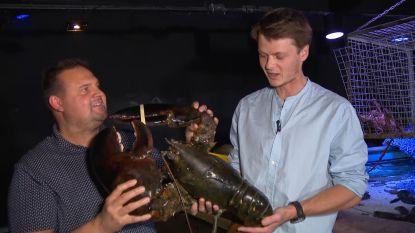 Stokoude kreeft Wesley overleden in Sea Life Blankenberge