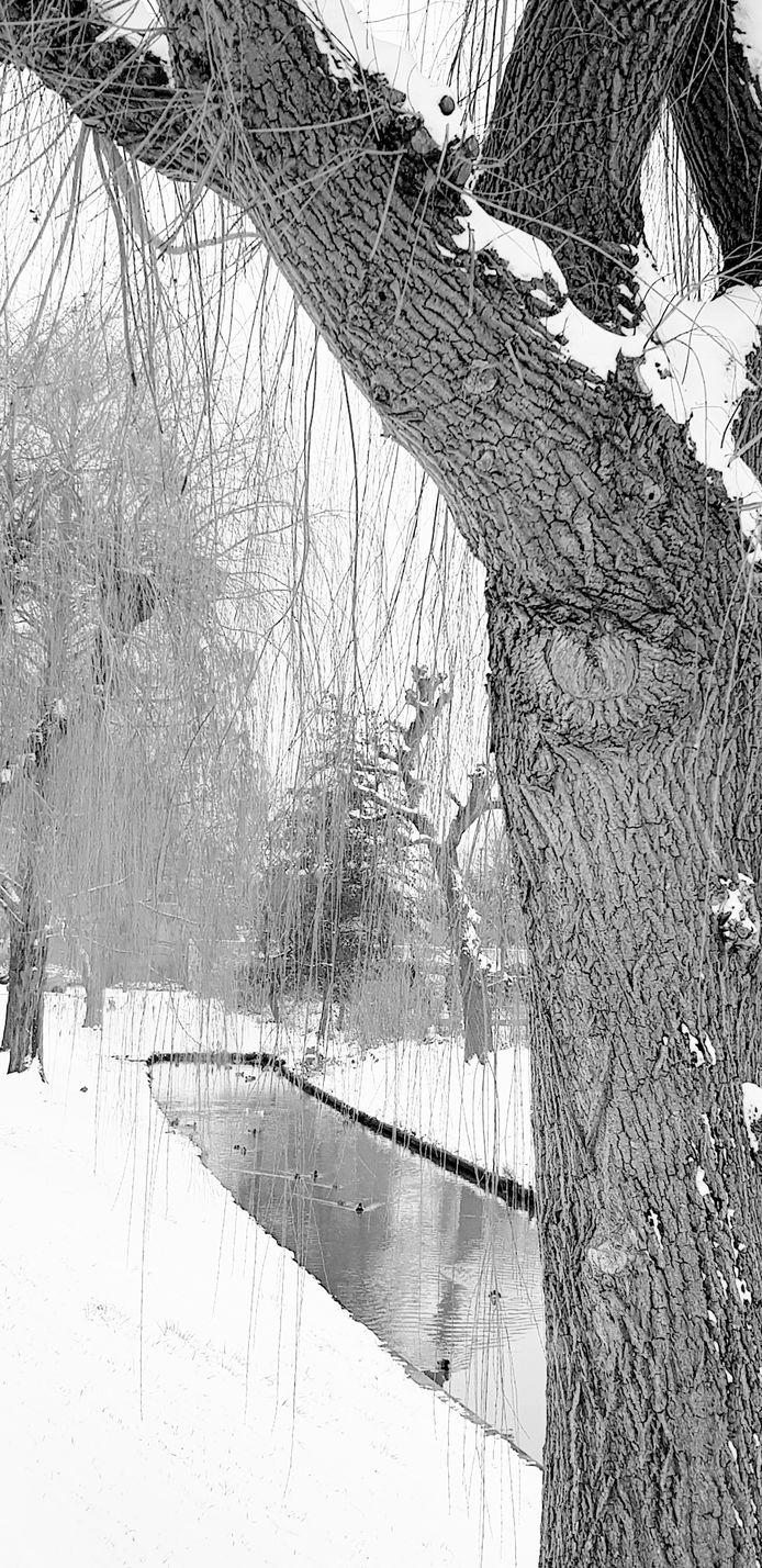 Er is door de sneeuw weinig kleur meer te zien in Elst.