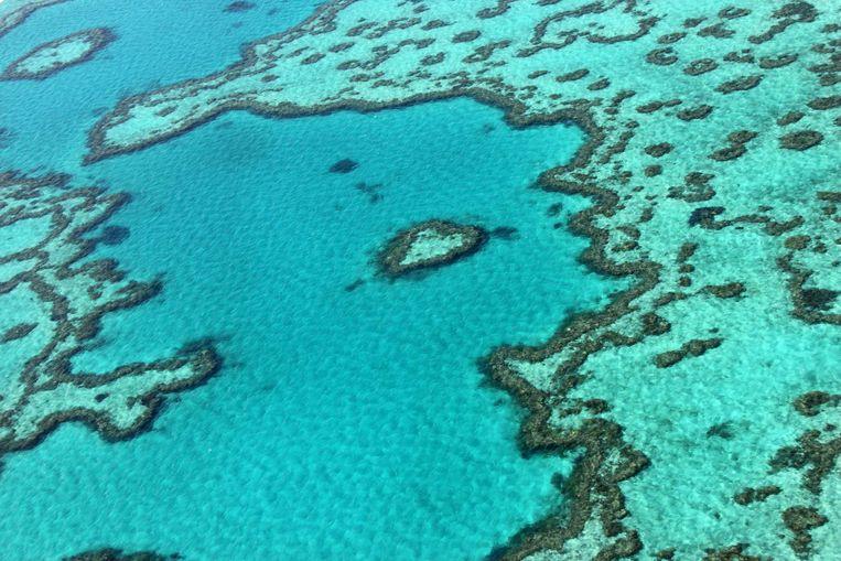 Het Great Barrier Reef in Australië.  Beeld AFP