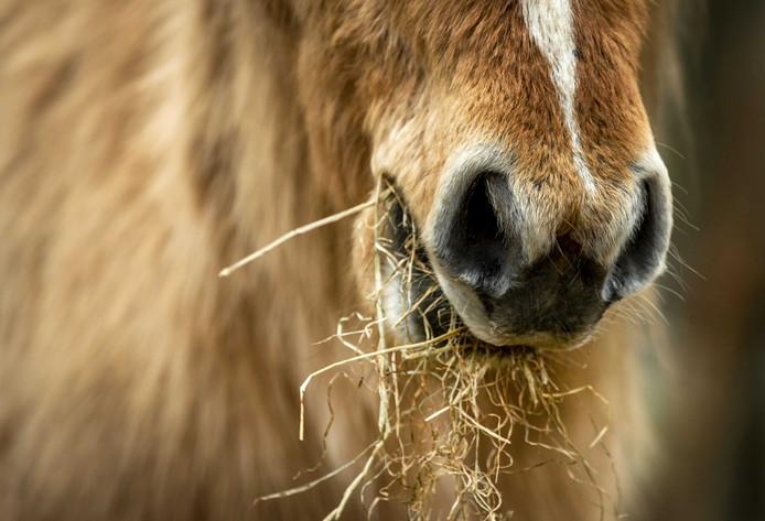 Mensen die hongerende dieren hebben bijgevoerd, worden niet vervolgd.