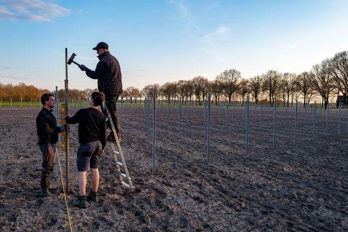 Pim Hesselmans (l) gaat met zijn vader en broer, Beekse wijn maken.
