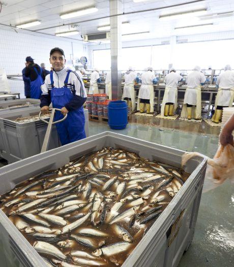 Visverwerkers extra kwetsbaar bij corona: 'Virus blijft dagen hangen'