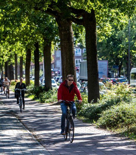 Partij 'van het asfalt' en GroenLinks willen samen strijden voor behoud bomen