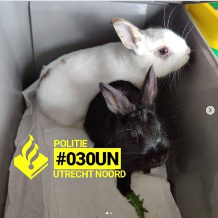 De konijnen die werden achtergelaten in Park de Gagel.