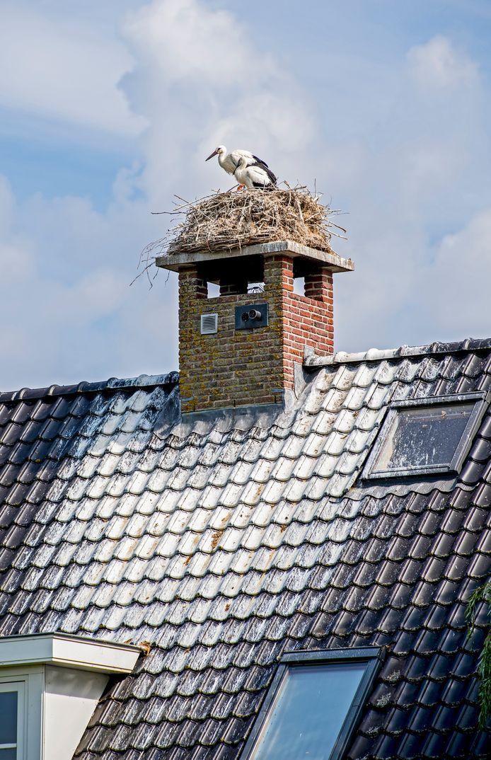 Ooievaarsnest op de woning die te koop staat: hele huis ondergescheten in Zegveld.