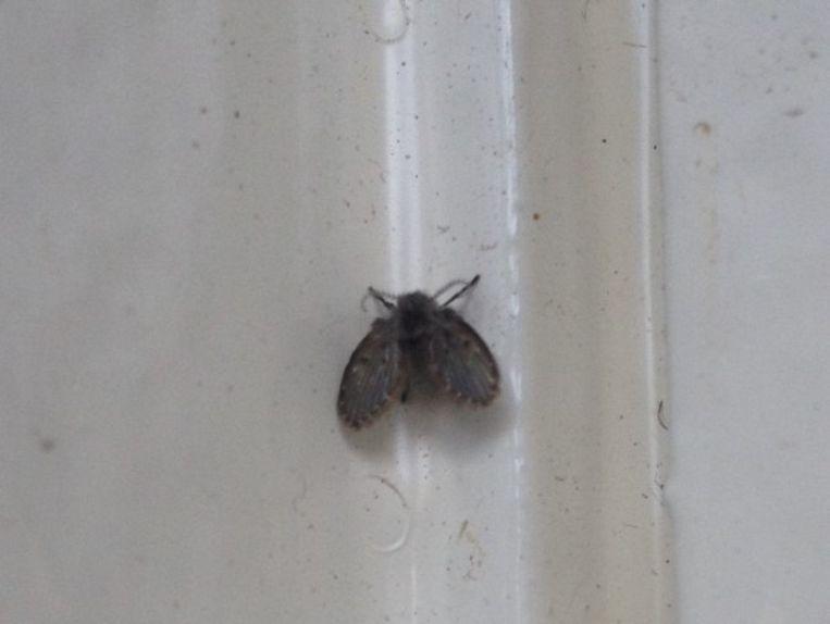 Is het een mot? Is het een mug? Het is een motmug | TROUW