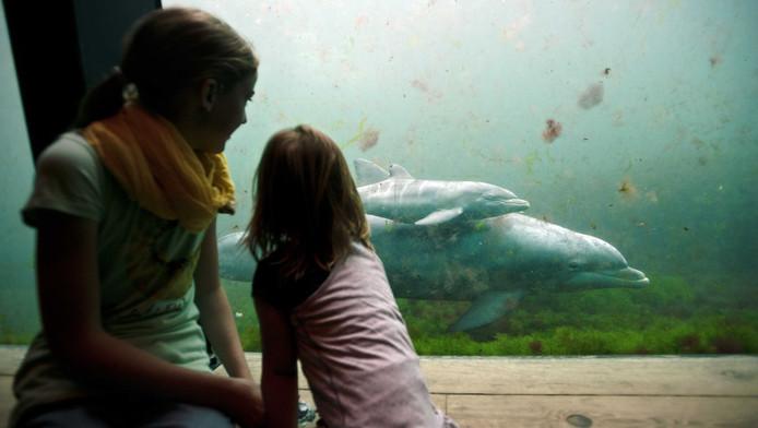 Dolfinarium Stopt Met Steun Aan Sos Dolfijn Binnenland Adnl