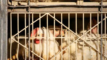 Ronse haalt verkoop van levende dieren uit marktreglement