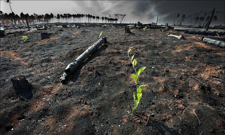 Het stijgende niveau van de oceanen zal wereldwijd steden blank zetten. Hittegolven zullen voor bosbranden zorgen, hevige regens voor overstromingen.
