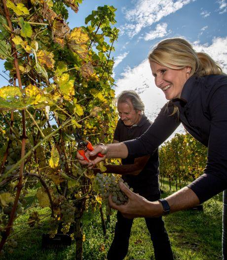 Wijnboeren volgen weersverwachting angstvallig: 'We hebben een probleem als het eind april gaat vriezen'