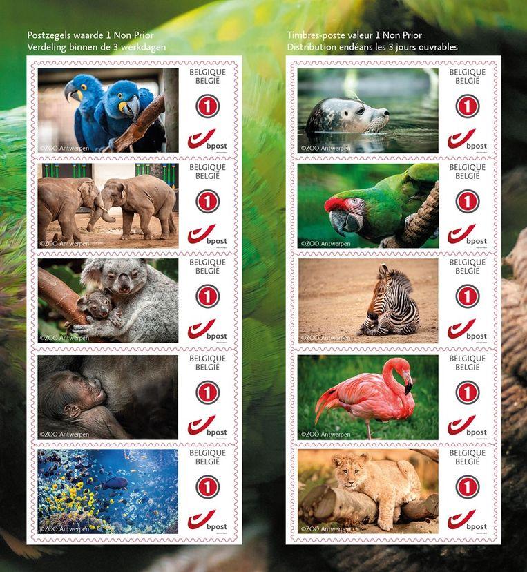 De postzegels van de Zoo van Antwerpen.