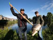Oproep na massale karpersterfte in Duiven: zet je vissen niet uit in andere wateren en vijvers