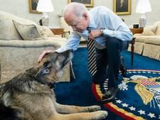President Biden treurt om overlijden herdershond Champ (13): 'Zullen hem eeuwig missen'