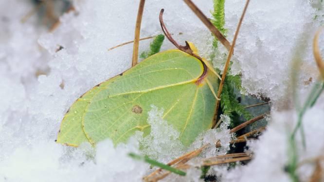 Waarom een weekje vrieskou geen probleem is voor fauna en flora