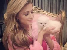 Nieuw schoothondje Paris Hilton heet Princess Paris
