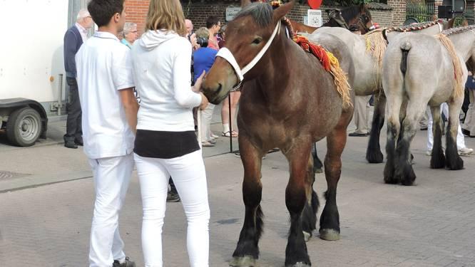 Paarden spotten op septemberkermis in Landegem
