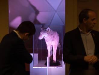 """'Probleemwolf' of 'succesverhaal'? Vooruit wil wolf niet zomaar opgeven en noemt uitspraken van CD&V """"populistisch"""""""