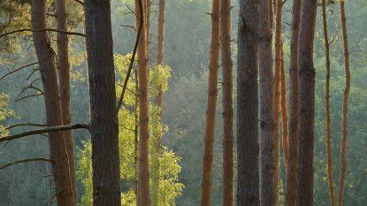 """Ontbossingsrapport van WWF: """"Belgische import kost te veel bos"""""""