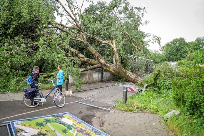 Aan de Texandrilaan in de Apeldoornse wijk Orden legde een flinke boom het loodje.