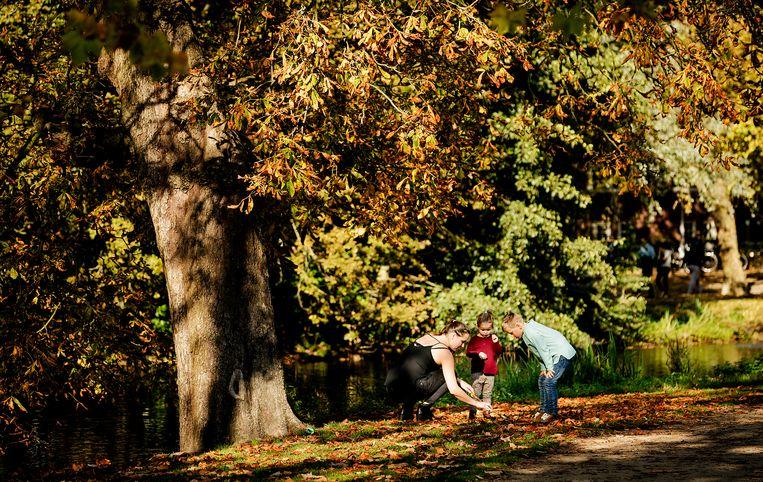 Bezoekers in het Vondelpark zoeken kastanjes op een herfstdag waarbij de temperatuur oploopt tot ruim twintig graden.  Beeld Hollandse Hoogte /  ANP