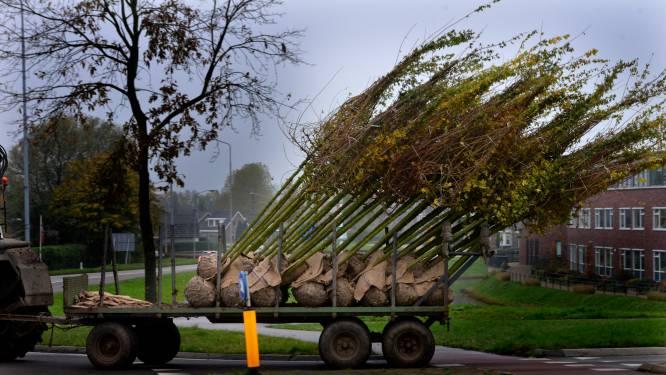Fietsexcursie met een historisch tintje langs de laanboomteelt
