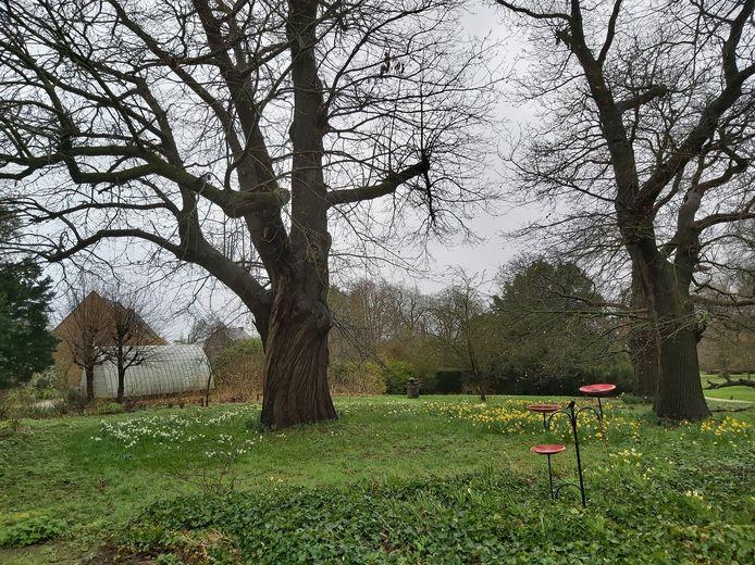 De prachtige kastanjebomen aan de ingang van het park