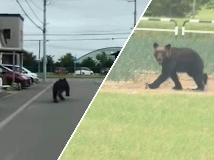 Bruine beer doodgeschoten na aanval in straten van Japanse stad
