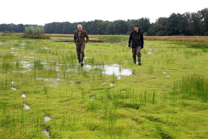Michiel Schaap en Hein van Kleef banjeren over een tapijt van watercrassula in het Korenburgerveen.