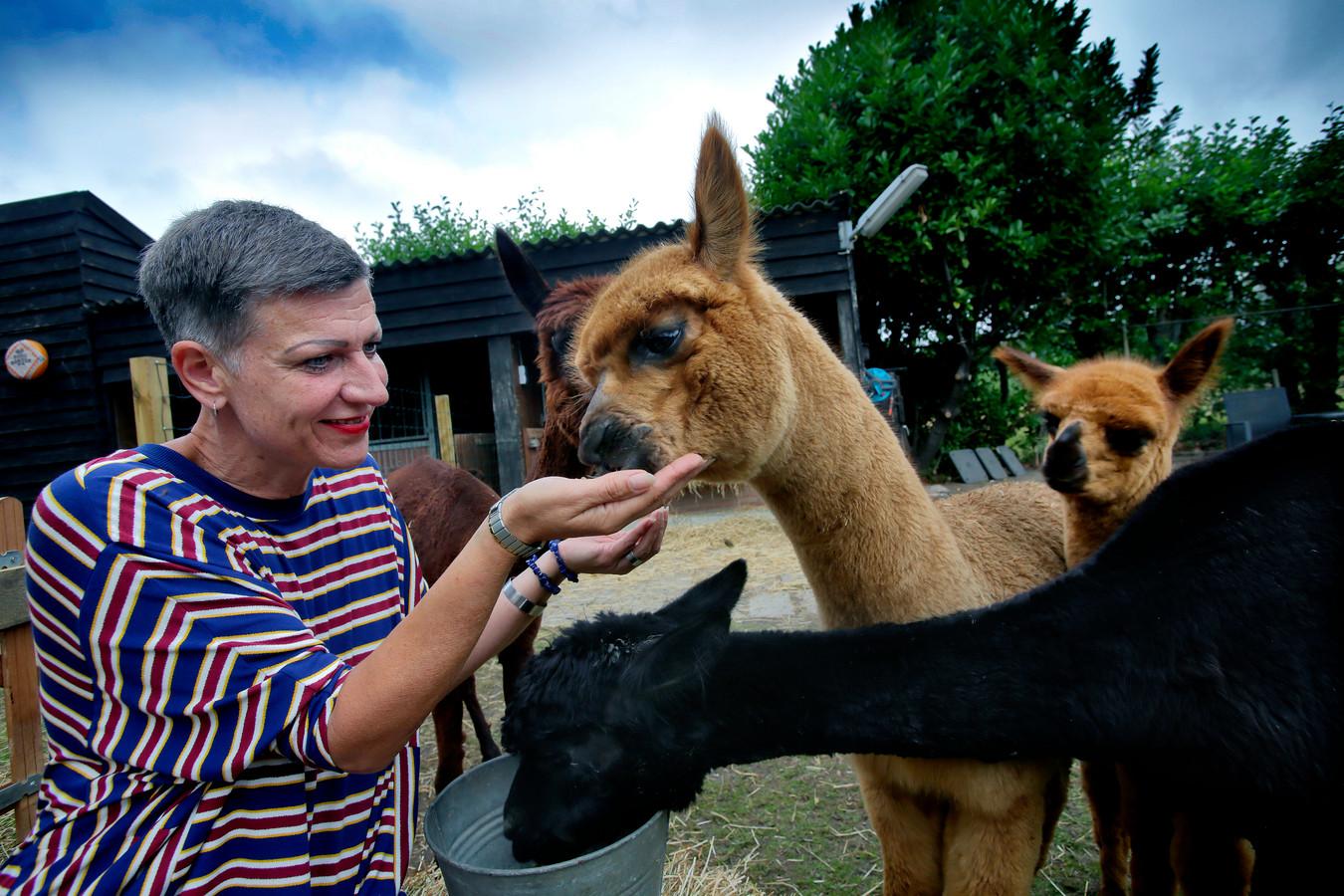 Mirella en de dieren bij haar Alpacake.