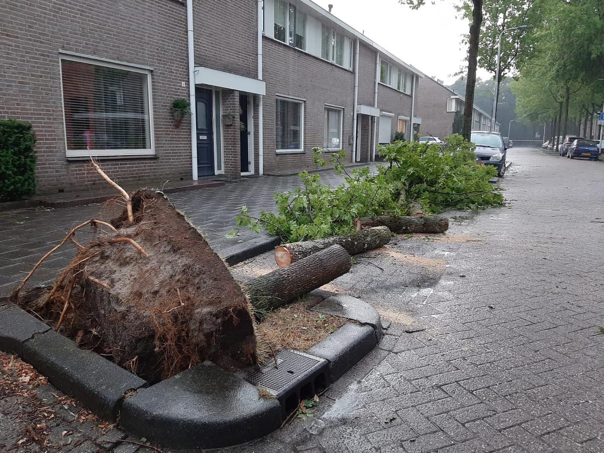 Boom omgewaaid op de Drimmelenstraat, Reeshof.