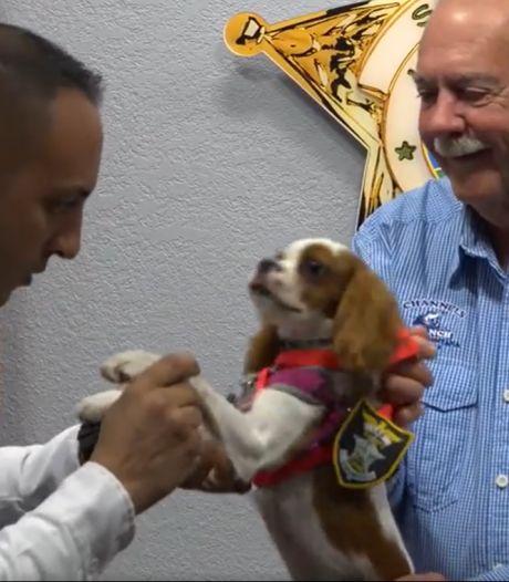 Puppy benoemd tot rechercheur na ontsnapping uit bek van alligator
