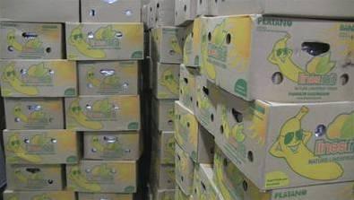 De drugs waren verstopt in een container met bananen.