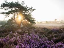 Dit zijn de mooiste heidevelden in regio Utrecht (en zo maak je daar het perfecte plaatje van)