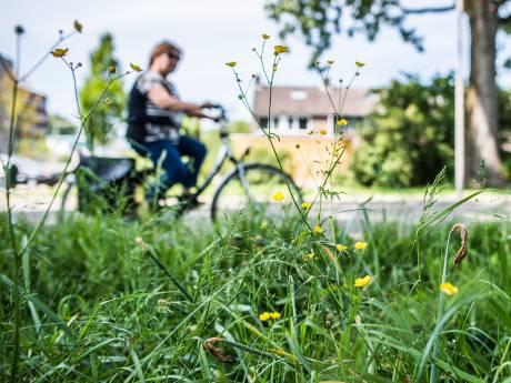 Daar komt een grasmaaier van de overheid: alle bijen, vlinders en insecten dood. Is dat zo?