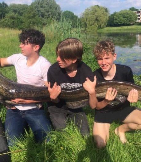 Tristan (16) vangt monstermeerval in Deventer wijk Zandweerd: 'Hij sleurde mij bijna het water in'