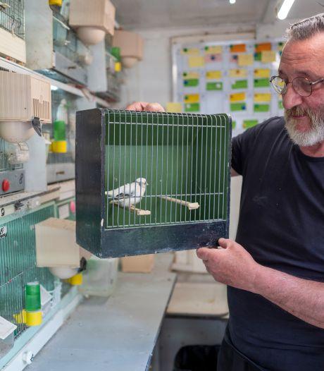 Vogel in een hok zielig? 'Het gaat erom dat je een dier met respect behandelt'