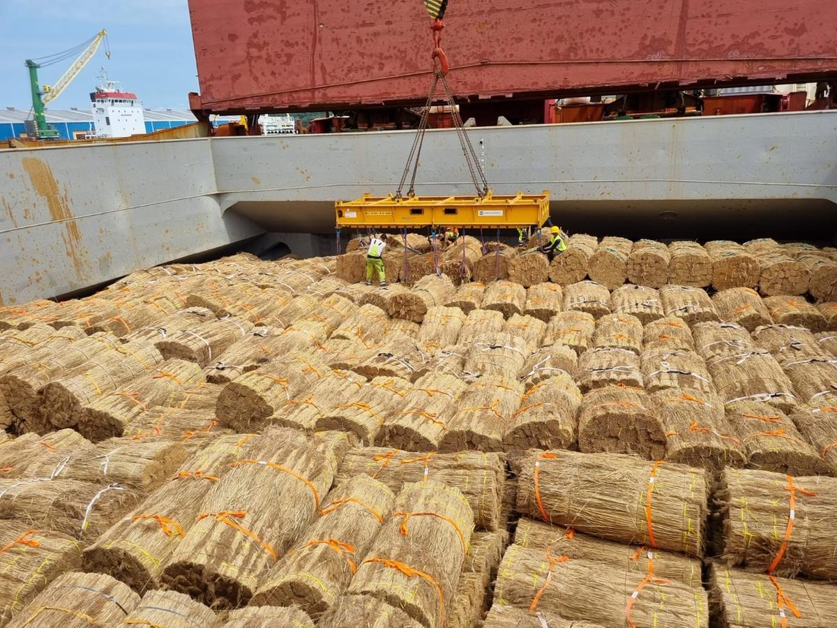 Riethandelaar Girbe van Rees uit Genemuiden importeert riet onverzekerd per bulkschip uit China, omdat de kosten van transport per zeecontainer torenhoog zijn.