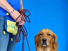 "Pokaa, premier chien ""renifleur de Covid"" en maison de retraite en France"