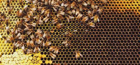 Des vandales tuent 60.000 abeilles à Lede après avoir détruit des ruches