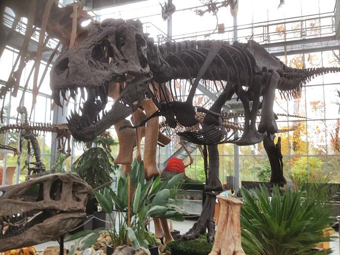 paleontoloog oertijdmuseum boxtel: 'fossiel gaat naar de hoogste