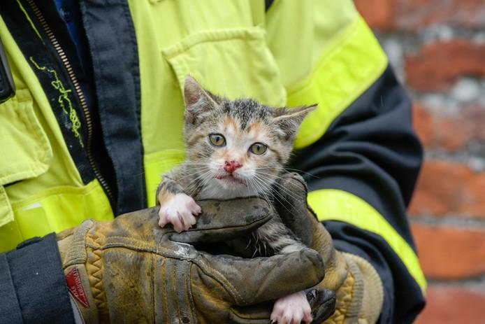 Kitten gered