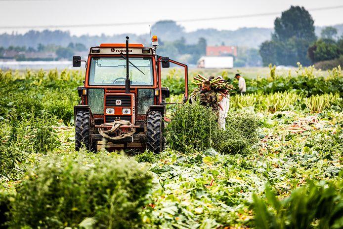 Boeren aan het werk op een stuk landbouwgrond in de Hoeksche Waard.