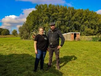 """Sammy en Jahna verloren dit jaar al 15 schapen nadat wandelaars dieren eten geven: """"Ze kunnen het eten niet verteren en sterven daardoor een vreselijke dood"""""""