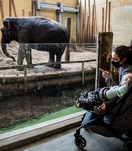 Zou de nieuwe dierenwet niet ook moeten gelden voor dierentuinen?