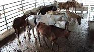 Aantal gevallen van dierenmishandeling neemt toe